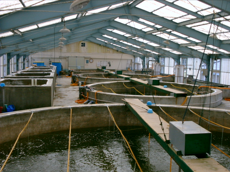 Ozone use in fish farming